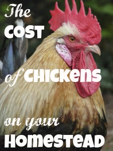 How much will your egg-laying chicken cost to raise and keep? At www.PintSizeFarm.com