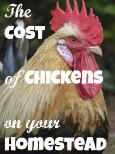 Details to figure the cost of chickens for your homestead - do you want backyard chickens? Found at www.PintSizeFarm.com