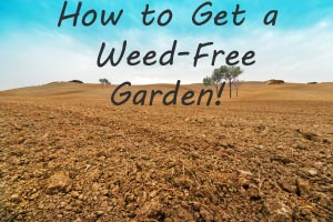 soil solarization can rid your garden of weeds