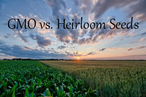GMO vs. Heirloom seed and why it matters!