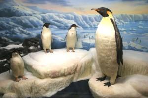 International Wildlife Museum Tucson Arizona