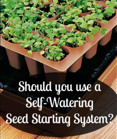 How does the Burpee self watering seed starting system work? Found at www.PintSizeFarm.com