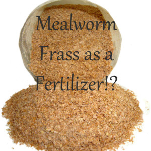 Mealworm frass is a great fertilizer!
