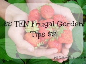 10 Money Saving Frugal Gardening Tips