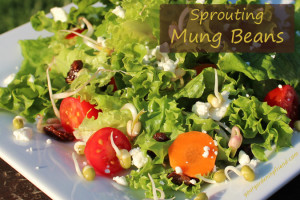 Sprouting Mung Beans - Featured Post of the Week