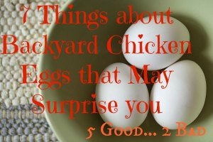 7 Surprising things about Backyard Chicken Eggs (5 good and 2 bad) found at www.PintSizeFarm.com
