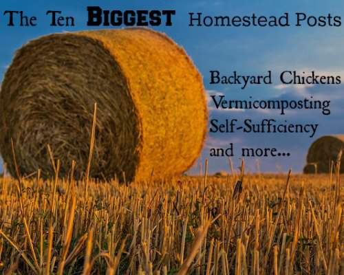 Pin now for reference and to read later! Great collection of homesteading posts - the top 10 by reader popularity.