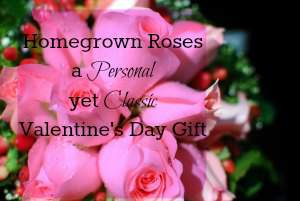 Valentine Roses are a great gift! How to found at www.PintSizeFarm.com