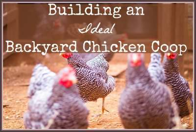 Tips to build an ideal backyard chicken coop. Found at www.PintSizeFarm.com
