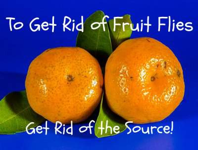 Get rid of fruit flies from the source and you won't have to constantly trap them. Found at www.PintSizeFarm.com