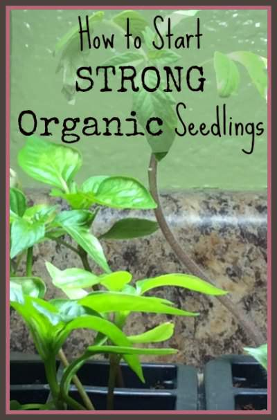 You do not need conventional fertilizers and tricks. Here is how to start strong plants for an organic garden using organic seed starting supplies. Found at www,PintSizeFarm.com