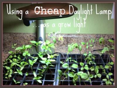 A cheap daylight lamp makes a great grow light.  Another way to use organic seed starting supplies to grow strong plants! Found at www.PintSizeFarm.com